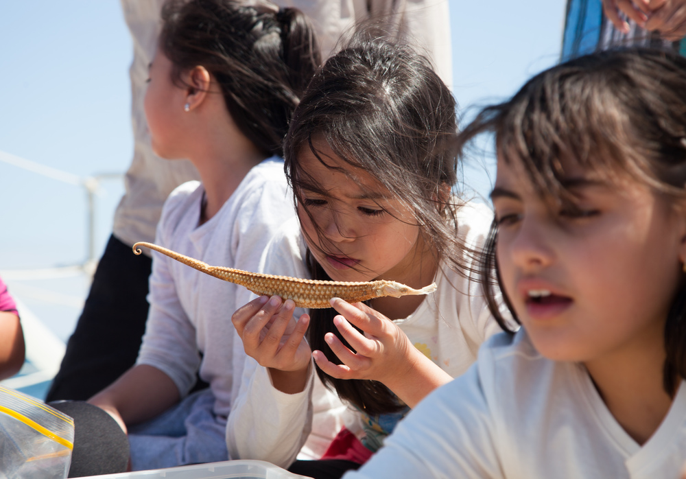 Hands on learning on Pelican1's trampoline. Grade 4 students from Mother of God Primary school getting a lesson in marine biology with Harry Breidahl and a pipefish.