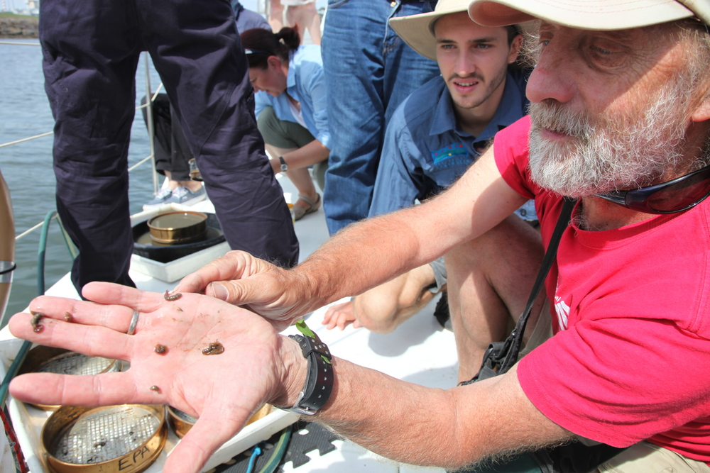 Harry Breidahl and Geo from the Ecocentre checking out the sea cucumbers found in the river sediment.