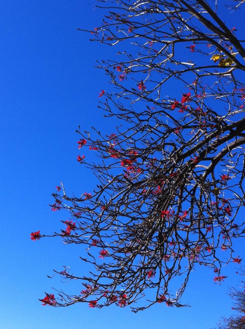 Winter in Queens Park