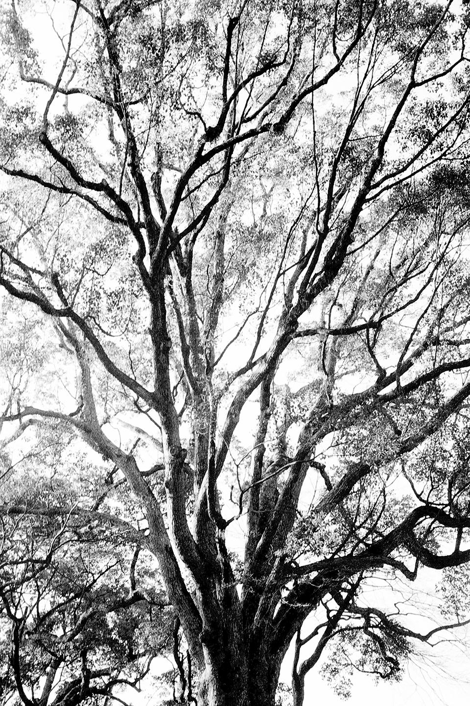 Untitled-13-2.jpg