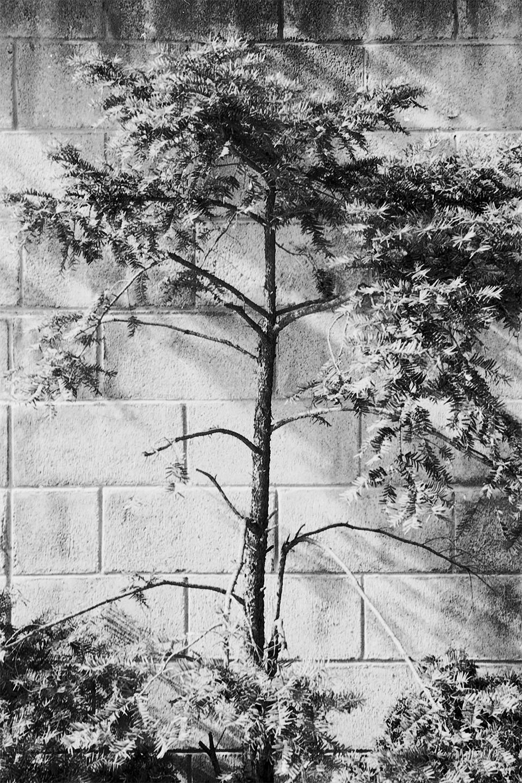 Untitled-17-1.jpg