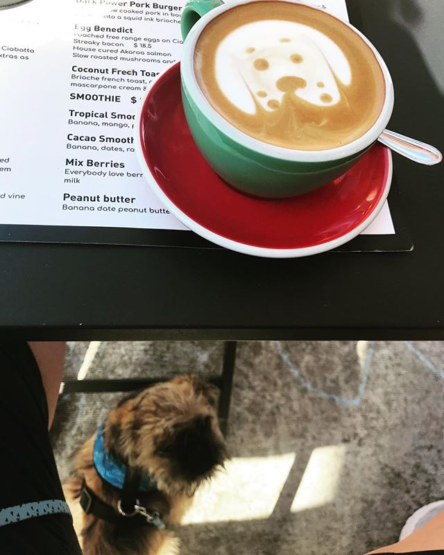It's the small things! Mans best friends; doggie & coffee. #coffee #latteeart #barista #dog #dogsofinstagram #cafe #bodhi #dogslife #pugxtibetanspaniel #griffons