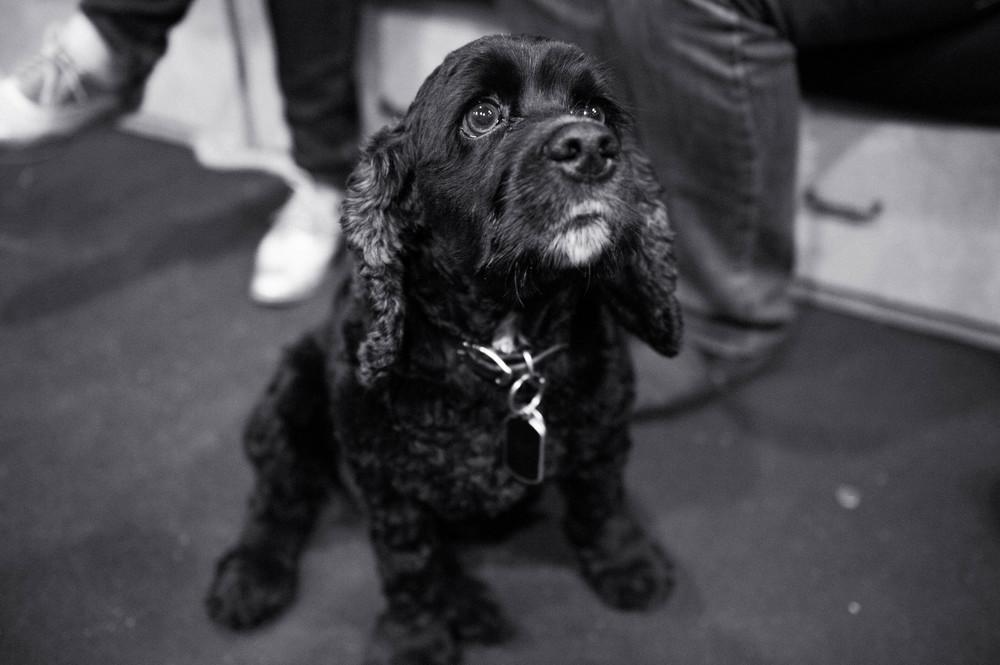 Bonus photo of Bizzy, because look how cute he is!