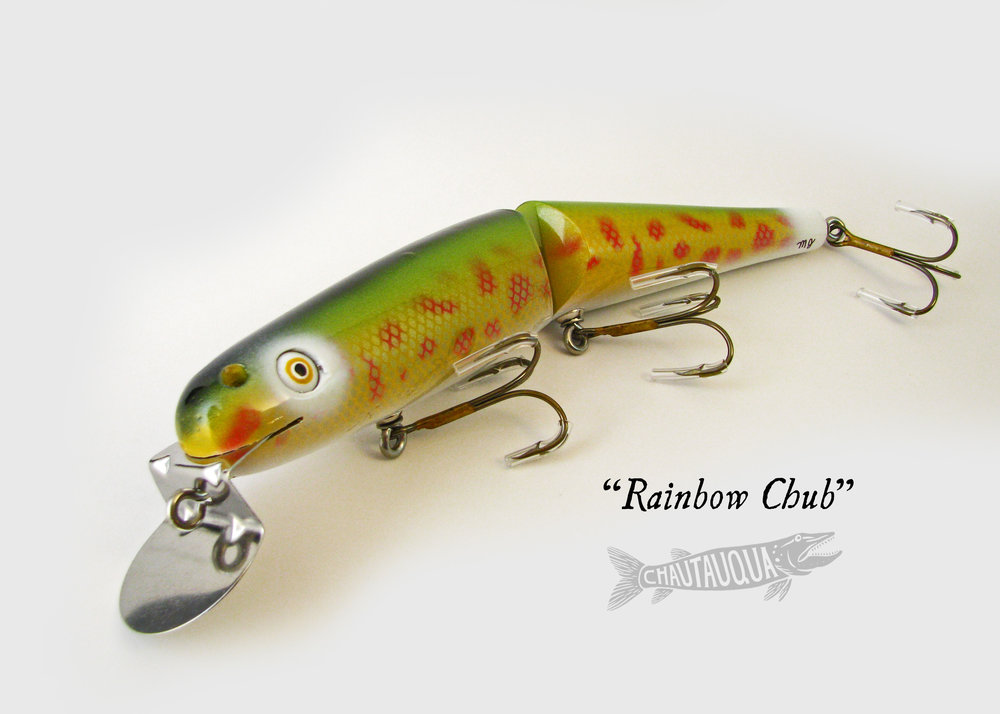 Rainbow Chub_JCM.jpg