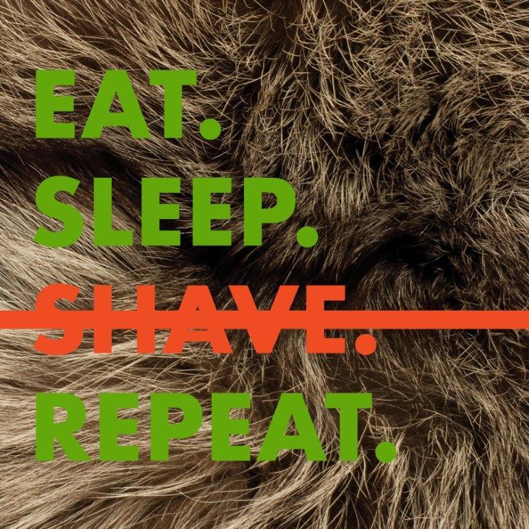 eat sleep shave