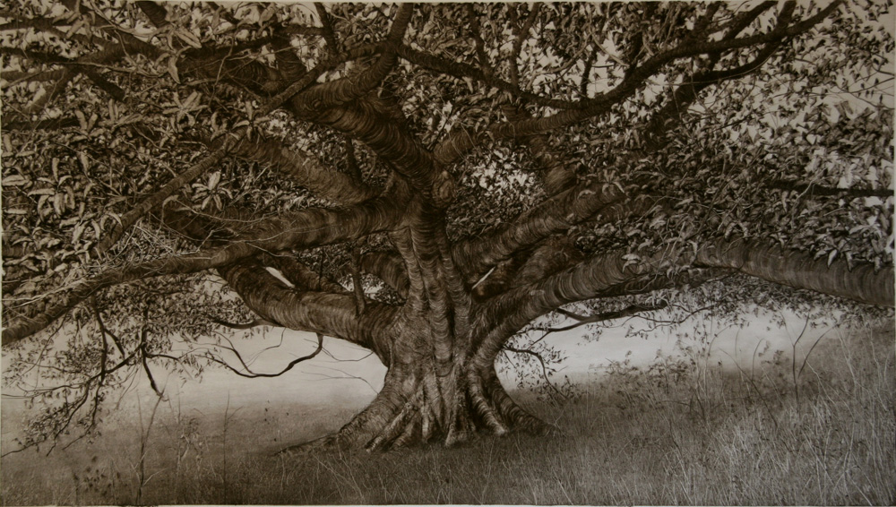 Fig in Long Grass, 2006. Oil on paper. 56cm x 100cm.