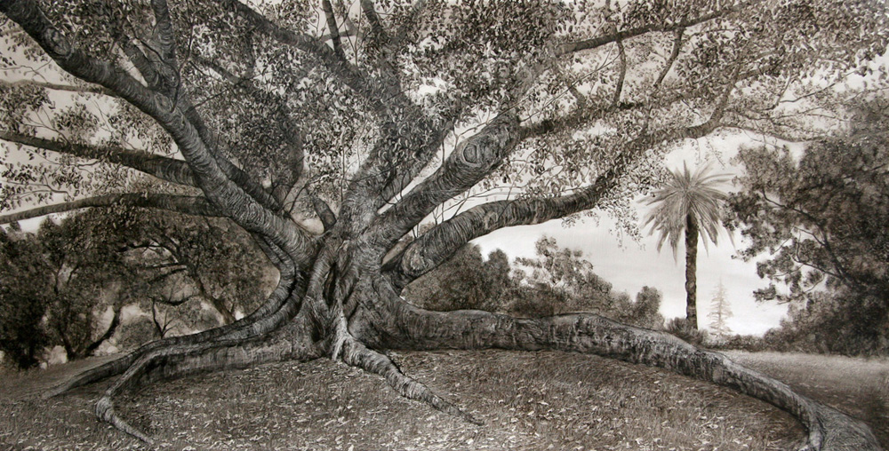 Long-rooted Fig with Palm, 2006. Oil on paper. 83cm x 160cm.