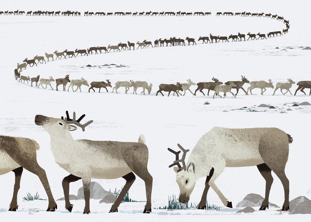 caribou-spread.jpg