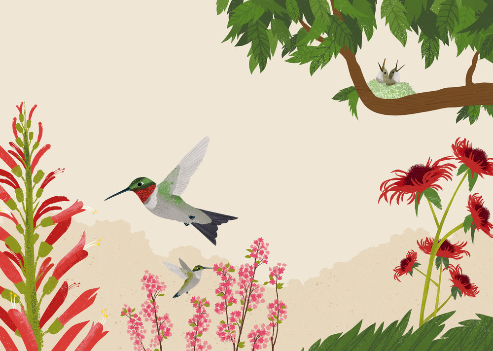 Ruby-Throated-Hummingbird-Spread.jpg