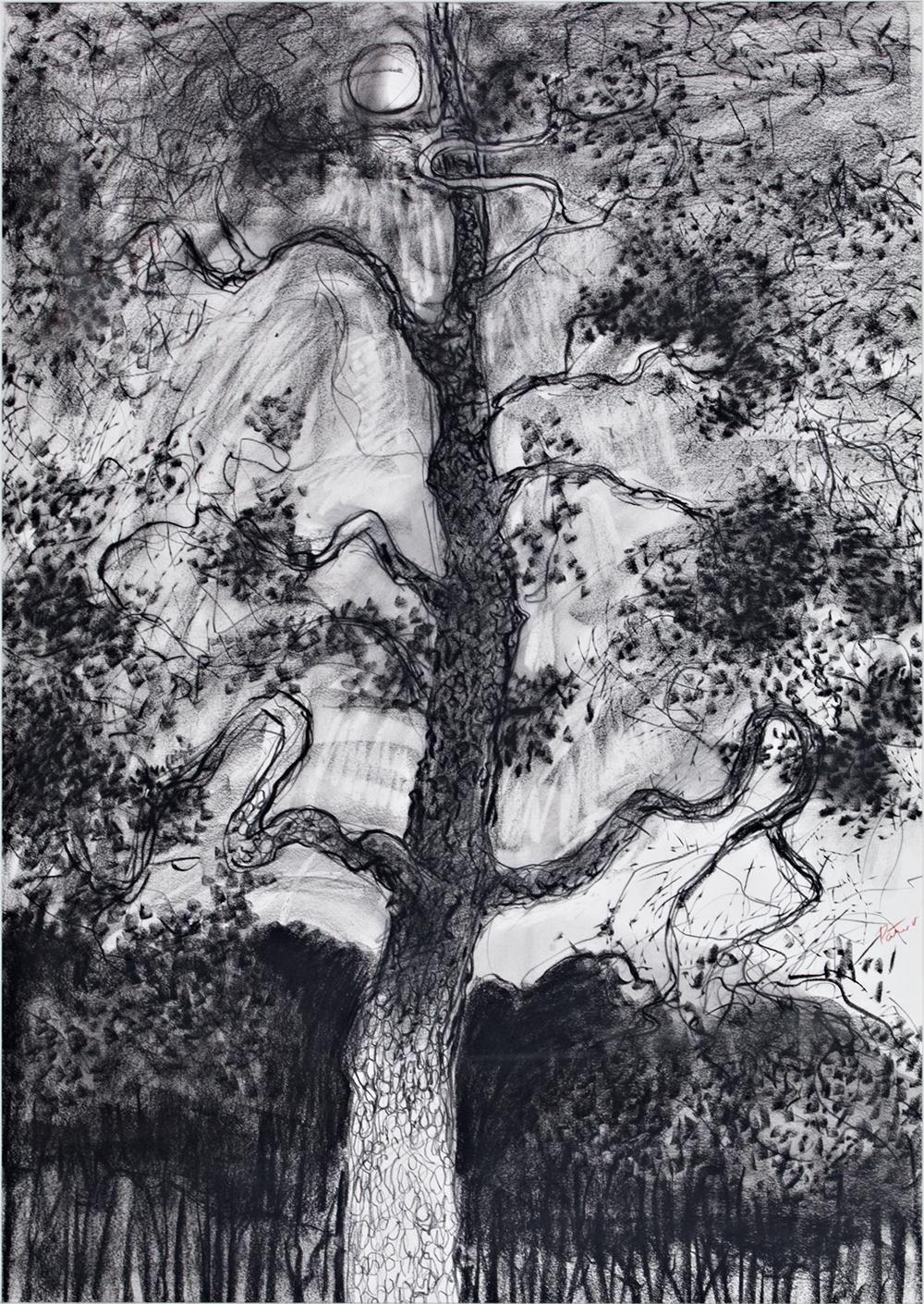 Range Tree  30 x 44