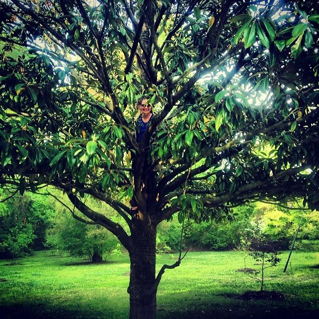 britt tree.jpg