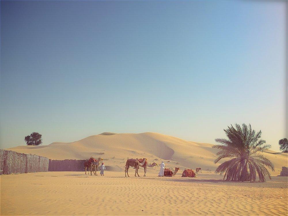 CAMELS-DUBAI- 004.jpg