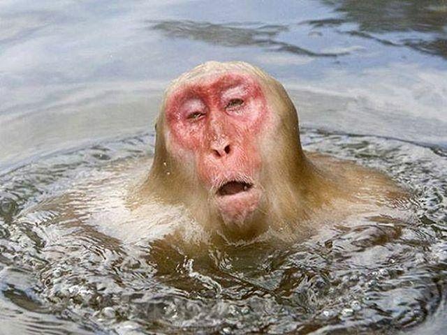 Wet monkey Wednesday.  #zipzoo #xlsd9000
