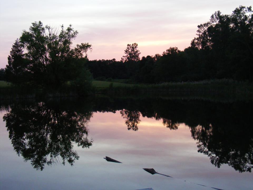 pond4.jpg
