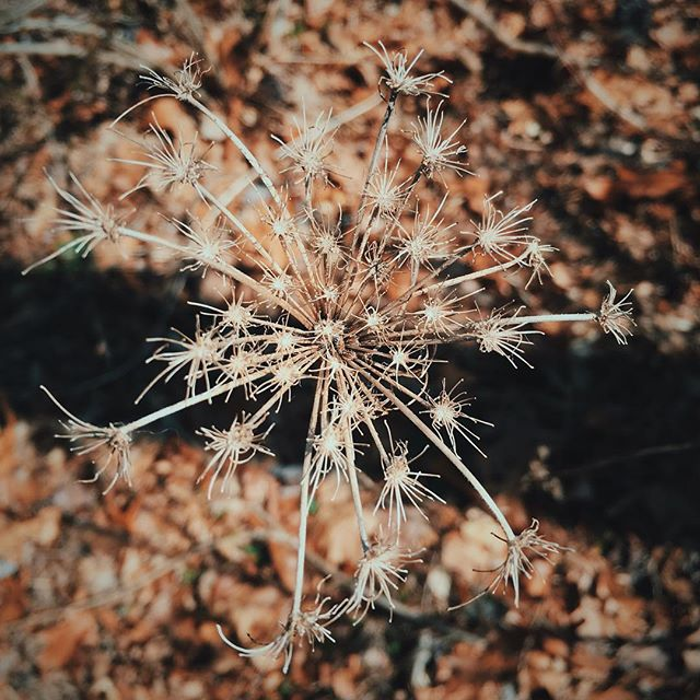#vsco #vscocam #vscogrid #ny #nature #spring #hudsonvalley