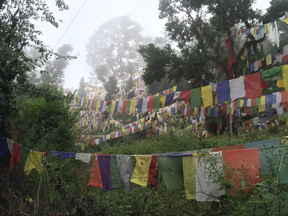 Prayer flag forest in Mcleodganj