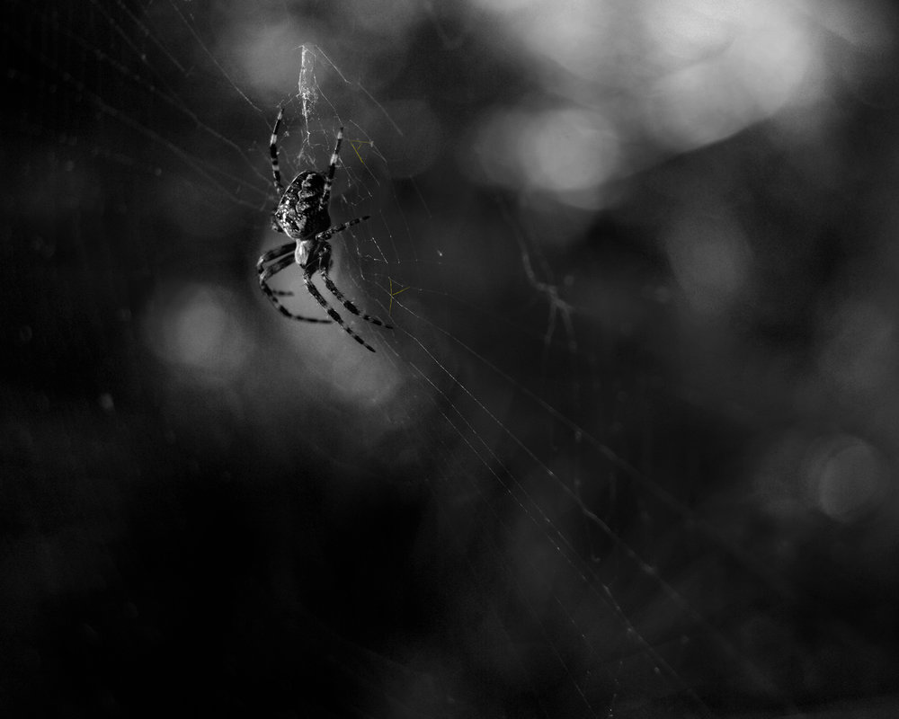 """Lindsey found a gold spider in the yard with letters worked in the web.""  William James Clark diary  September 16, 1896"