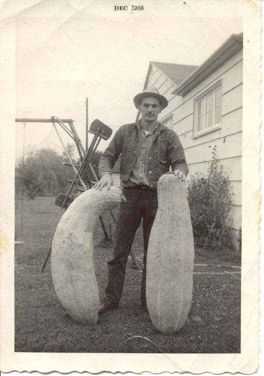 Scott's father, Willard Edwards, with banana squash in 1958
