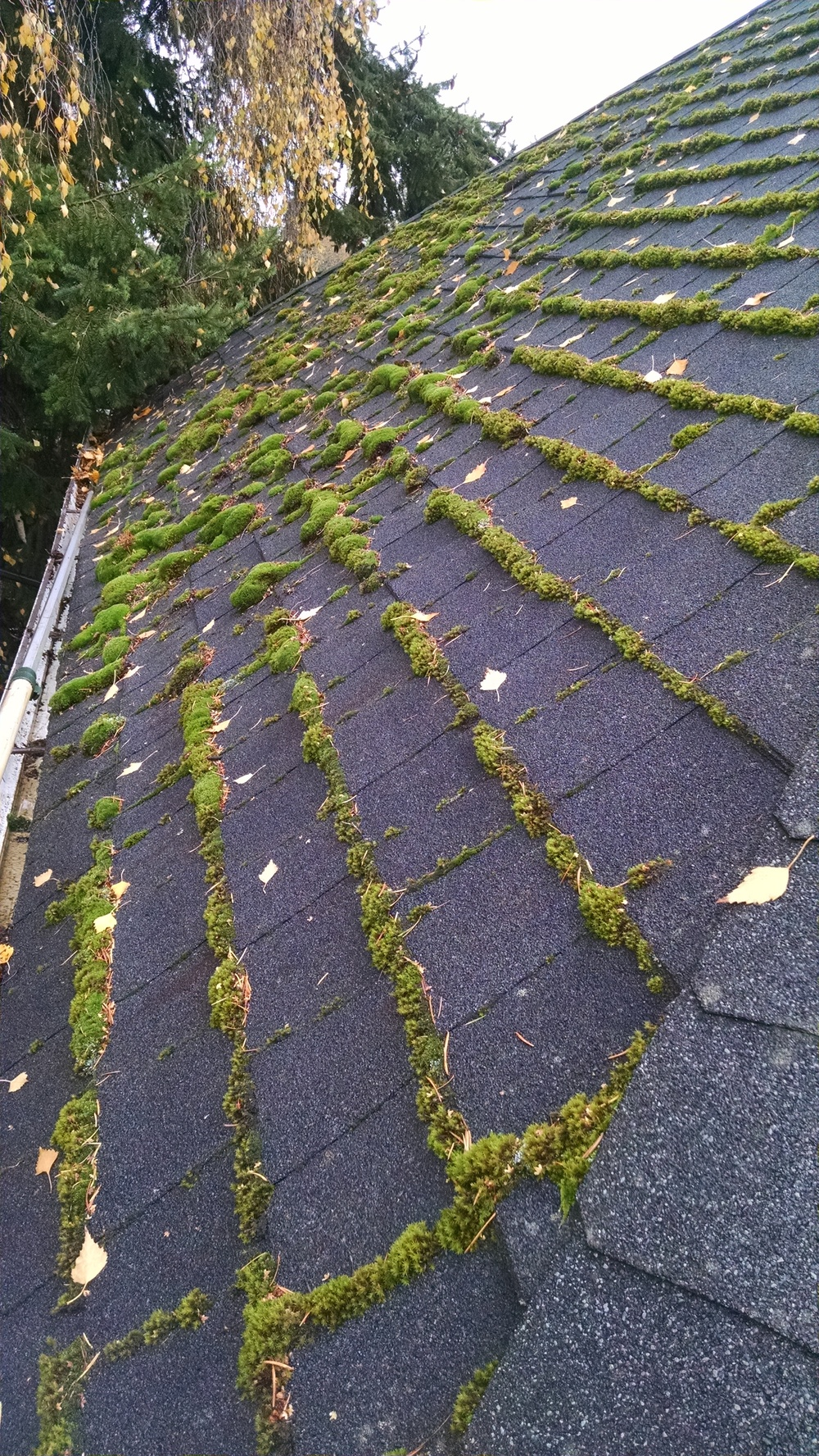 Portland Moss And Roof Cleaning (1)