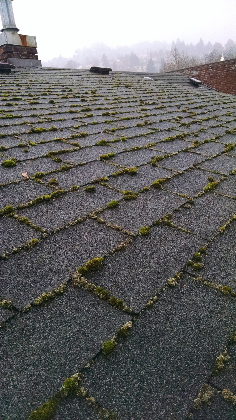 Moss Removal and Roof Cleaning Portland.jpg