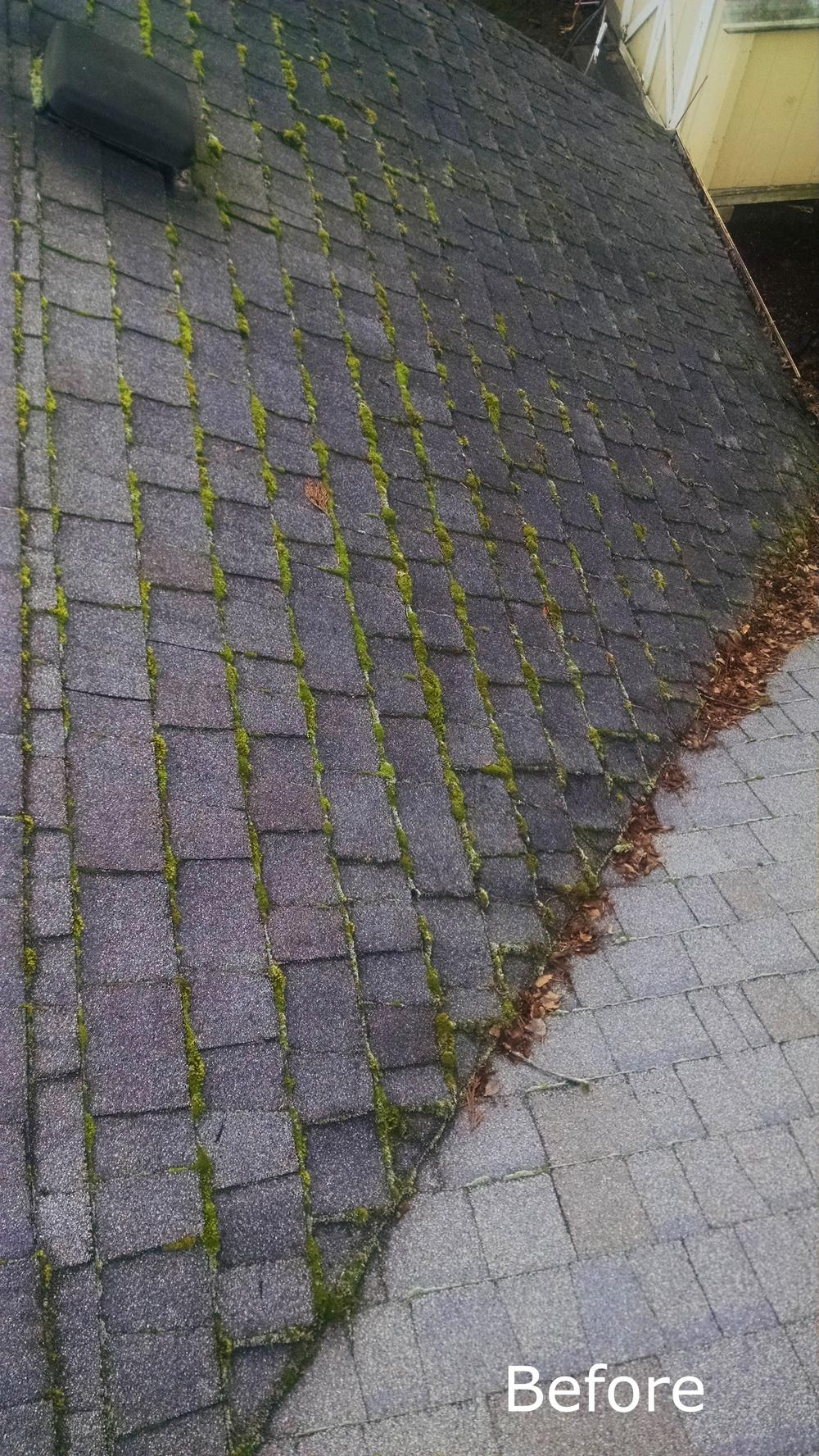 Moss Removal Portland.jpg