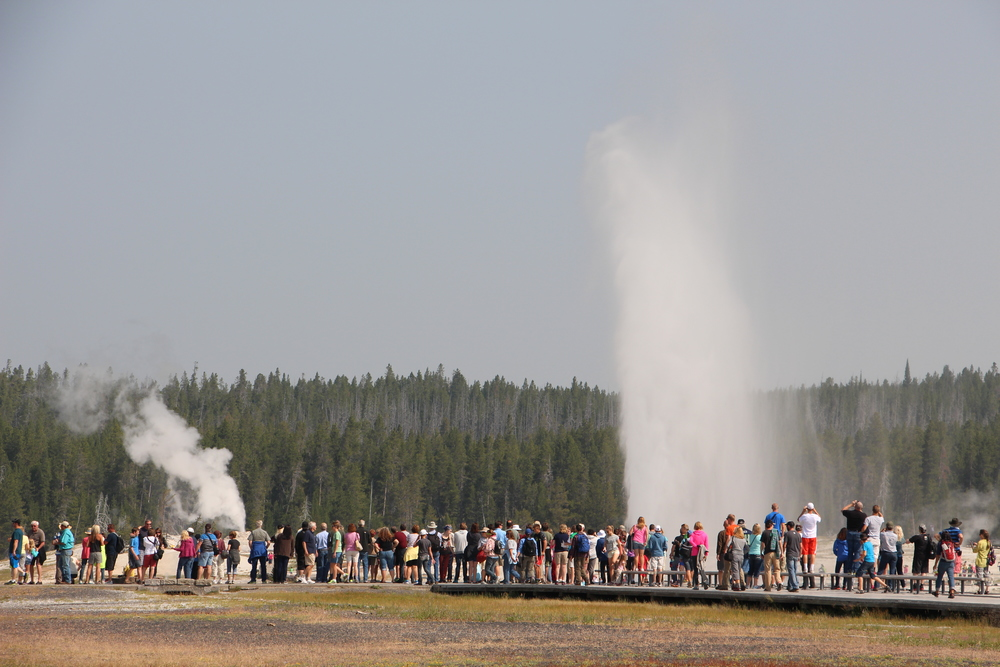 Old Faithful and Beehive Geyser.