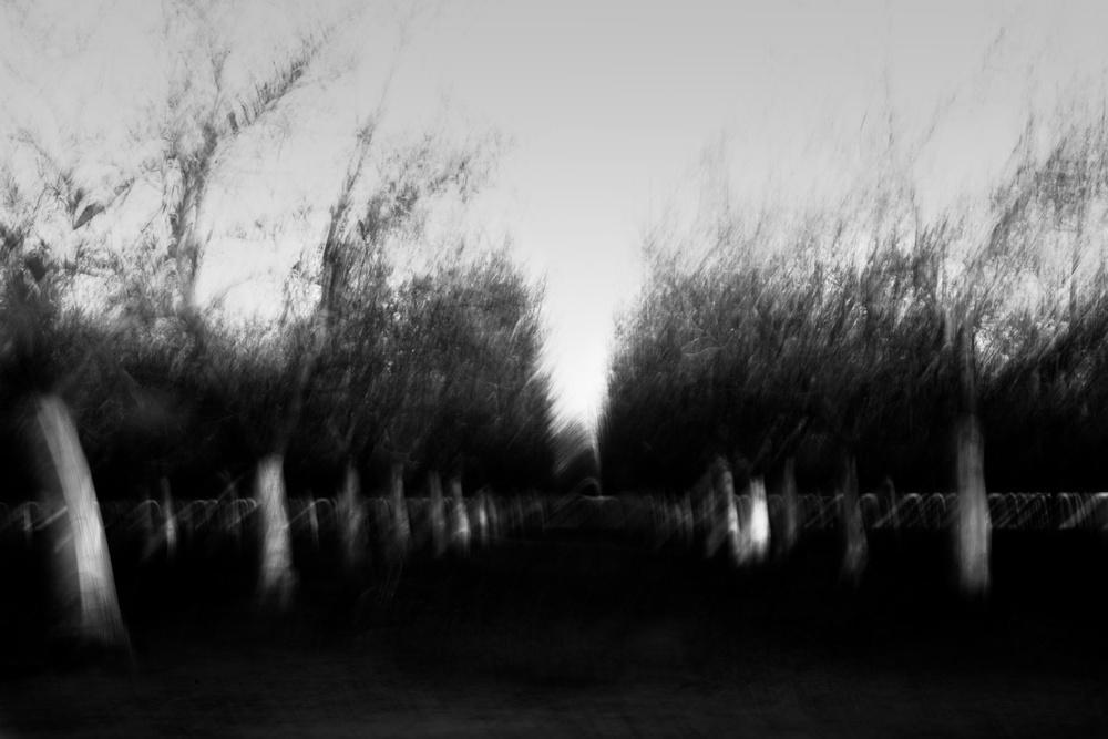 Orchard blur 1765 copy.jpg