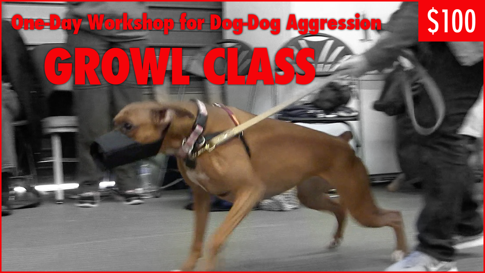 Growl_Class_Workshop.png