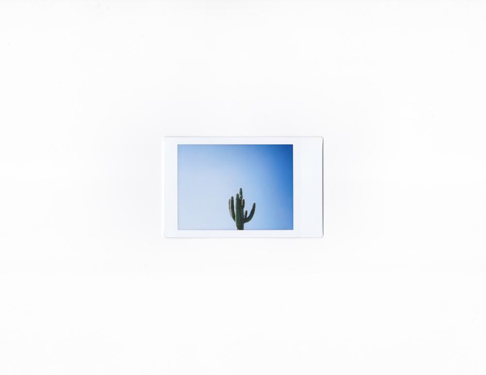Saguaro Cactus  Gila Bend, AZ   2.1.2015  FujiFilmInstax Mini 50s