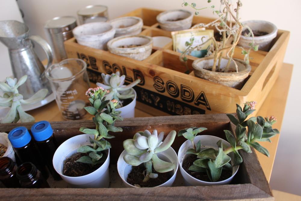 Decor A Succulent Gardener SF Blogger