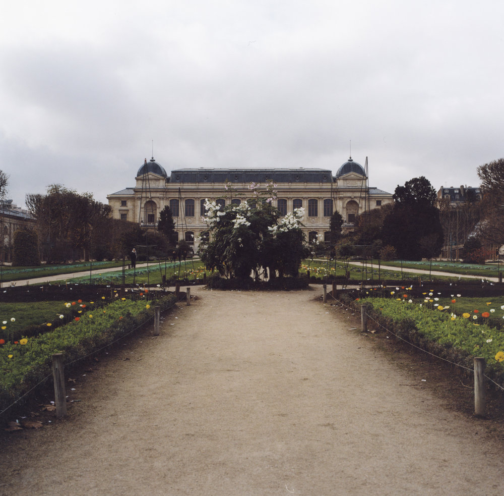 One of my favorite spots, the jardin des plantes, on the hasselblad