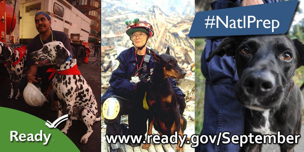 NPM_First_Respond_2014_3_medium.jpg