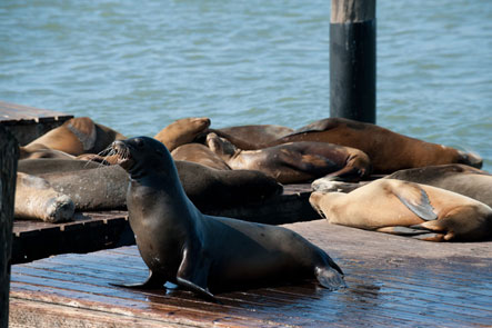 Photo: Sea Lion Center