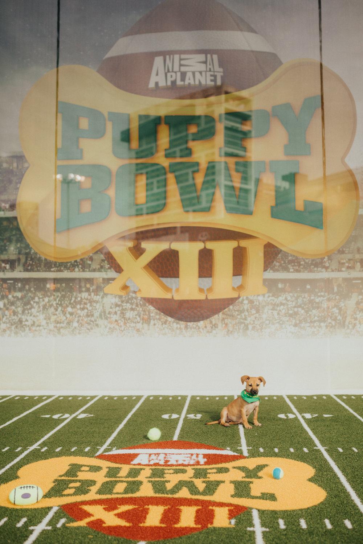puppybowl-4.jpg