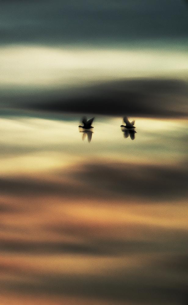 Aerial (2013)