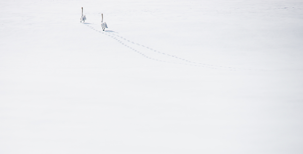 Passage (2012)