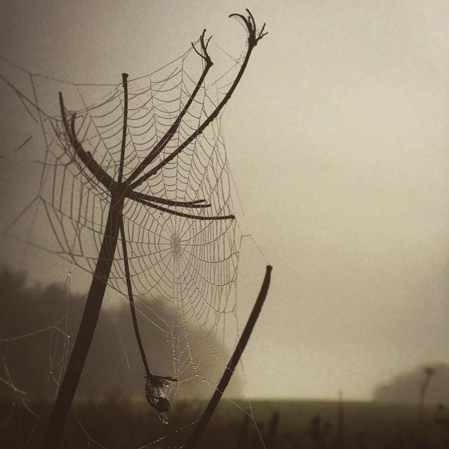 Calm and quiet for the spiders to spin their dewdrop catching nets... ------------------------------- #nothingisordinary #rsa_rural#rsa_outdoors#earlymorning#autumn#mist#dew#spider#web#ig_countryside #gooutside