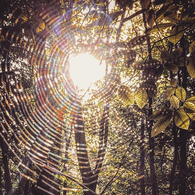 #sunshine on #spiderweb What could be more appropriate for #Autumn ? 🍁🍂🍁🍂🍁🍂🍁🍂🍁🍂 #nature#natureshots#rsa_rural #rsa_nature #ig_countryside #shotoniphone #lightinspired#rsa_outdoors#nothingisordinary#forest#lookup#sun#web
