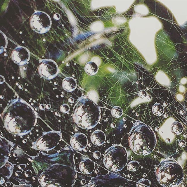 A #soggy start.  _________________________________ 💧💧💧💧💧💧💧💧💧💧 _________________________________ #lookcloser#autumn #earlystart#rsa_macro##rsa_rural#rsa_nature#rsa_water#ig_countryside#nothingisordinary#shotoniphone#camera+#dew
