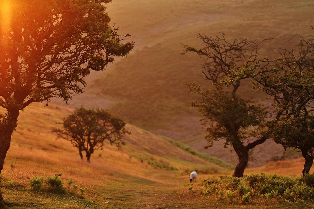 Lichen_trees.jpg