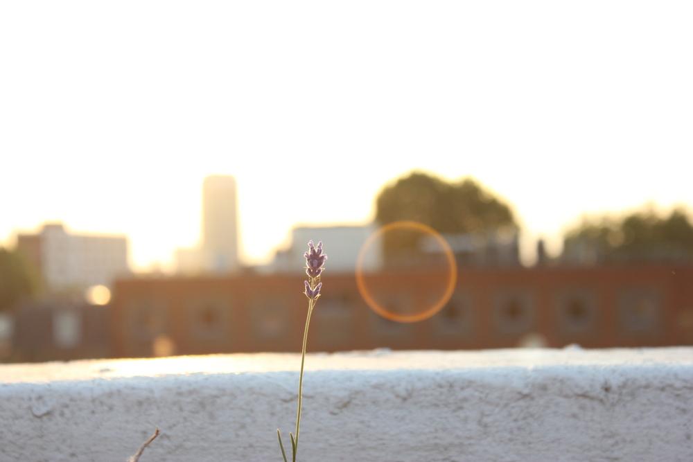Kennington_sunset_by_EmmaLundin.jpg