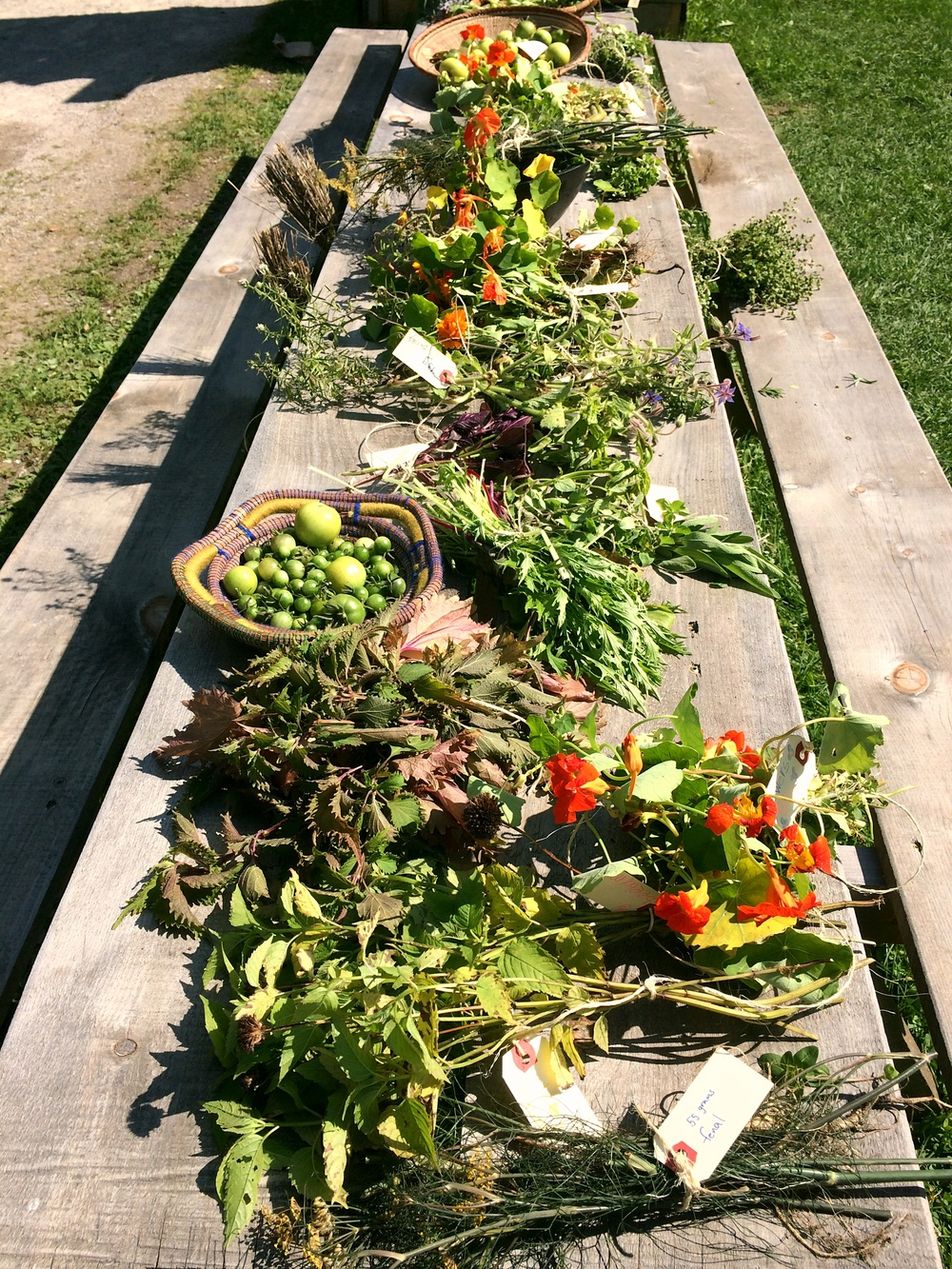 Harvest Table