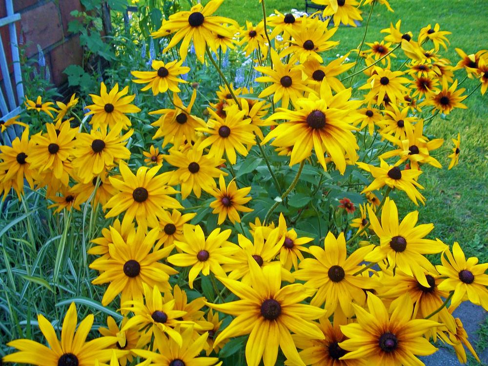 flowersrespite