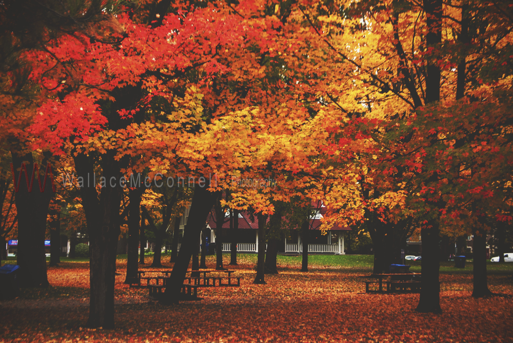 The colour of Autumn...High Park 2014