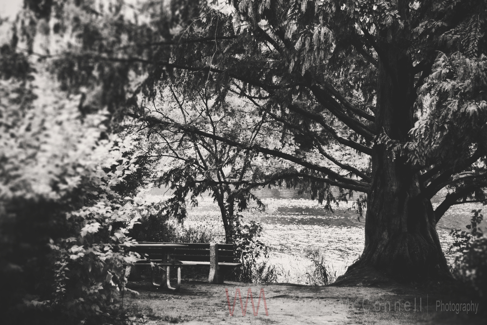 Park Bench with a view... High Park 2014
