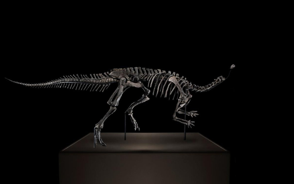 Authentic 154 million years old Camptosaurus skeleton.  376 x 140 x 94 cm   Meteorite.  6 X 6 X 8 cm