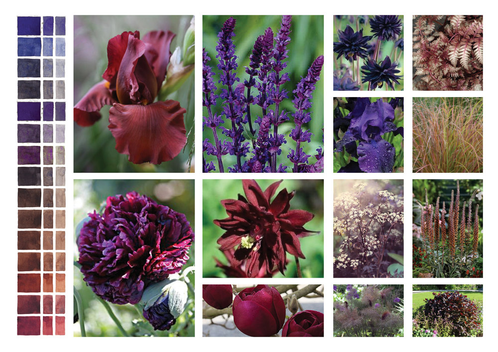 Blackheath Plant Palette