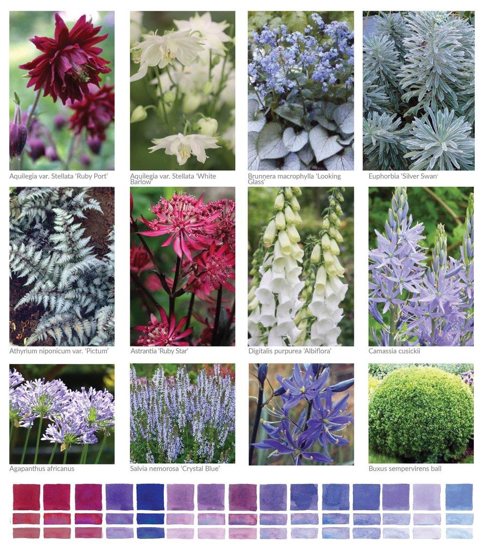 Plant Palette Surrey.jpg
