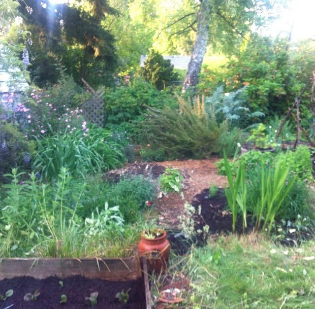My Pdx garden.jpg