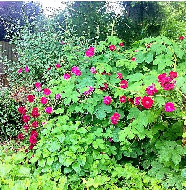 Roses & Hops.jpg